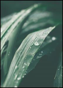 Bildverkstad Waterdrop Poster