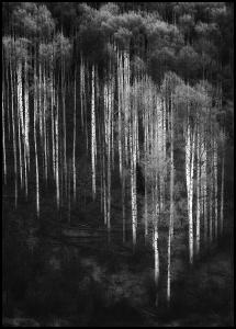 Bildverkstad Forest Art Poster