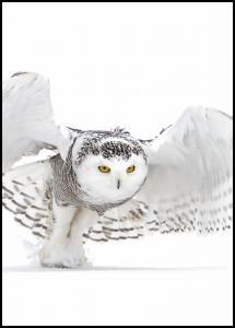 Lagervaror egen produktion Snowy Owl Jazz Wings Poster