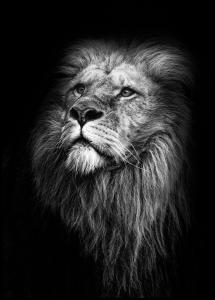Bildverkstad King Of Lions Poster
