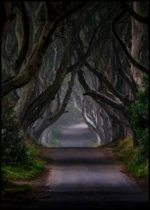 Bildverkstad The Dark Hedges Magic road Poster