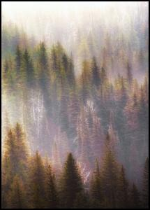 Bildverkstad Misty Mood in the Forest Poster