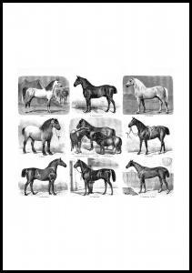 Lagervaror egen produktion Paardenrassen Poster