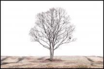 Bildverkstad The lonely tree Poster