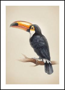 Lagervaror egen produktion Tropical Toucan Poster