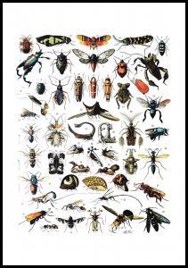 Lagervaror egen produktion Schoolposter insecten I Poster