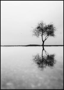 Bildverkstad Lonely Tree Reflection Poster
