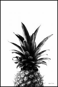 Bildverkstad Pineapple B&W Poster