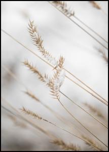 Bildverkstad Swaying Reed I Poster