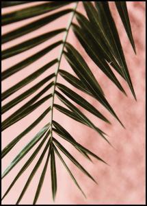 Lagervaror egen produktion Pink pastell palm Poster
