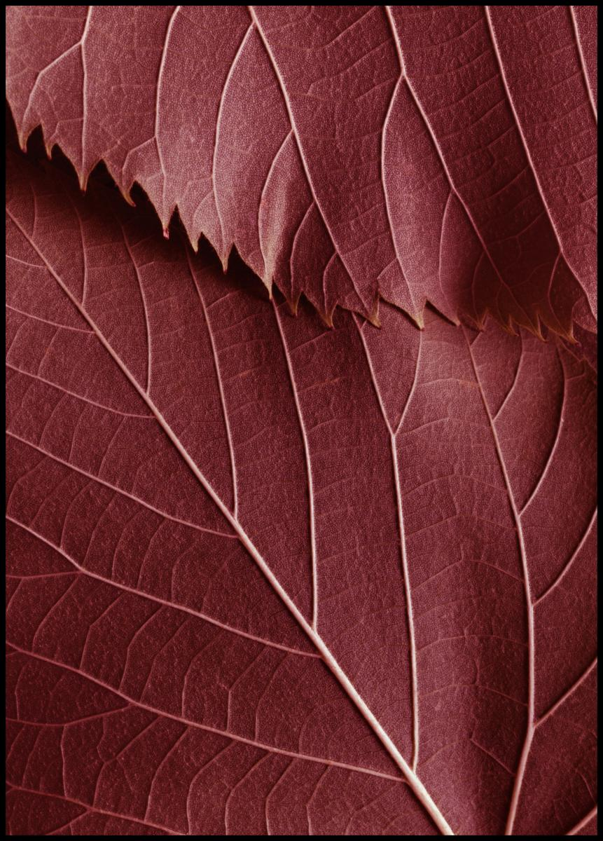 Bildverkstad Red Leaves Poster