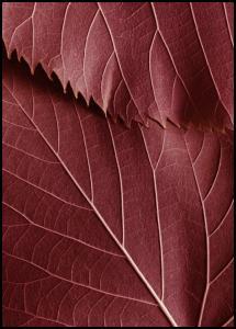 Bildverkstad Red Leaves Poster