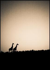 Bildverkstad Giraffes Poster