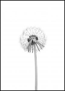 Bildverkstad Dandelion Poster